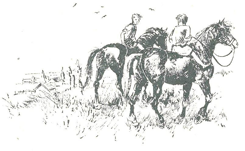 Paarden Fazenda